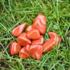 Röd Jaspis