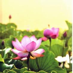 Lotus Field anteckningsbok