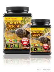 European Tortoise juvenile - European Tortoise juvenile 540g