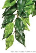 Jungle Plant Ficus