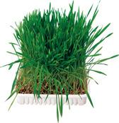 Gnagargräs 100 g