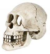 Kranium poly 15 cm