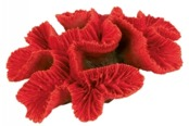 Havsroskorall 17 cm