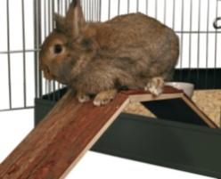 Bro för kanin & marsvin - Bro för kanin & marsvin