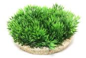 Plastväxt Green Moss