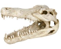 Krokodilkranie - Krokodilkranie