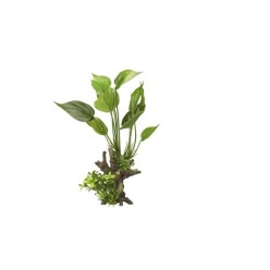 Dekoration växt - Dekoration växt