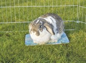 Kylplatta till kanin