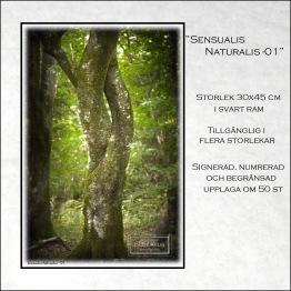 Sensualis Naturalis-1