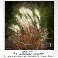 Höstgräs-2