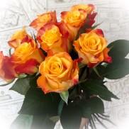 Underbar vacker orange ros