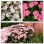 Stående dekoration Floristens val -rosa