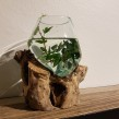 Handgjord glaskupa på trädrot