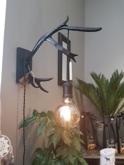 Renhornslampa - Renhornslampa