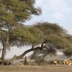 Etiopien 1