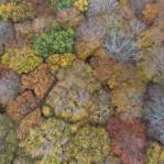 Lövskog i höstfärger2