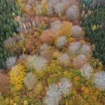 Lövskog i höstfärger 1