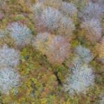 Lövskog i höstfärger 3