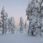 Vinter Dalarna 2