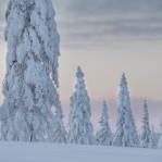 Vinter Dalarna 3