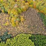 Skog och produktionsskog  1