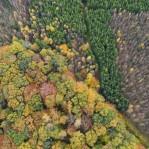 Skog och produktionsskog 2