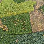 Produktionsskog
