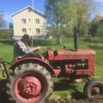 Våran Pettson hjälper oss med potatislandet