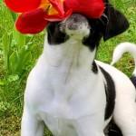 Oden,blomma i munnen 9V_ägare och foto Sakira Holmberg.