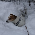 Januari Leonberget´z Snowman of Sweden, Anita Dandenell