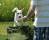 Jubileum 8 juni Flera hundar testade på hundlekparken. Foto Jan Ågren