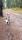 gårdshundsträff i Hemlingby (Gävle) 20191124 (2)