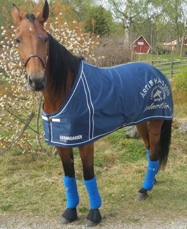 """Galactica i sitt fina """"Årets Häst 2016"""" täcke!"""