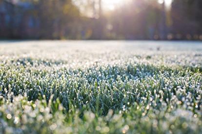 När slutar gräsmattan växa?