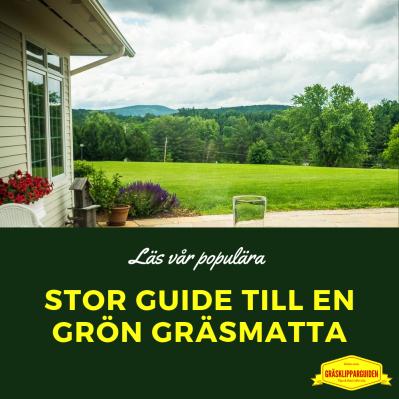 Stor guide till grön Gräsmatta