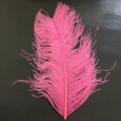 Strutsplym - Wapsi - FL. pink