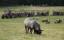 Upplev fåren på fårsafari