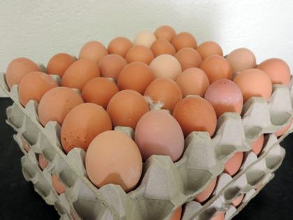 Beställ vita och bruna ägg i fack producerade av våra frigående höns på Järnvirke Hönseri mellan Varberg & Falkenberg mitt i Halland.