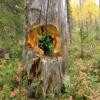 Stubbe-skogsdekoration