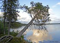 Sjö-Lappland Appojaure nr 617.E