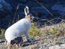 Hare-våren 14