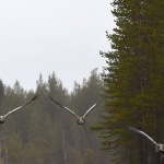 16-05-20D7200 007tranor i luften
