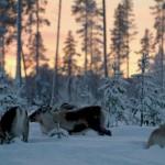 Renar Vinter (5)