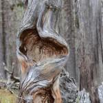 Formskapare Naturen