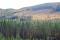 DSC_7143. vy Skogslandskap höst jpg