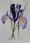 Iris 1.000:-