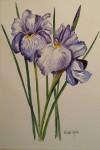 Iris igen 1.500:-