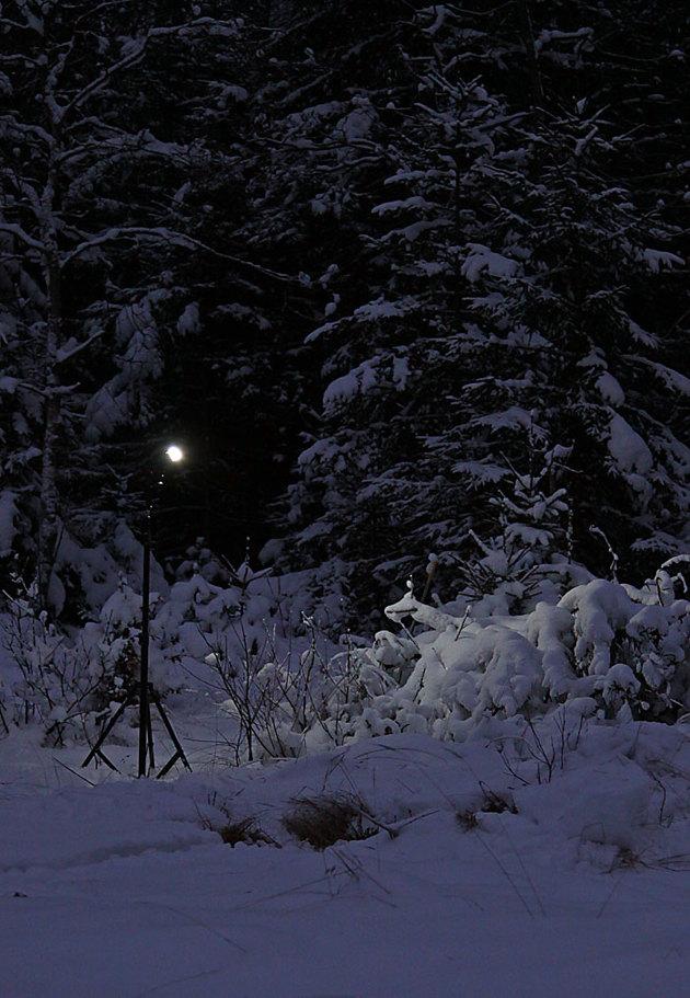 Trådlös komunikation mellan kamera och blixt som placeras på ett stativ fick snön belyst på granarna. Använde mig av samma system inne i lokalen.