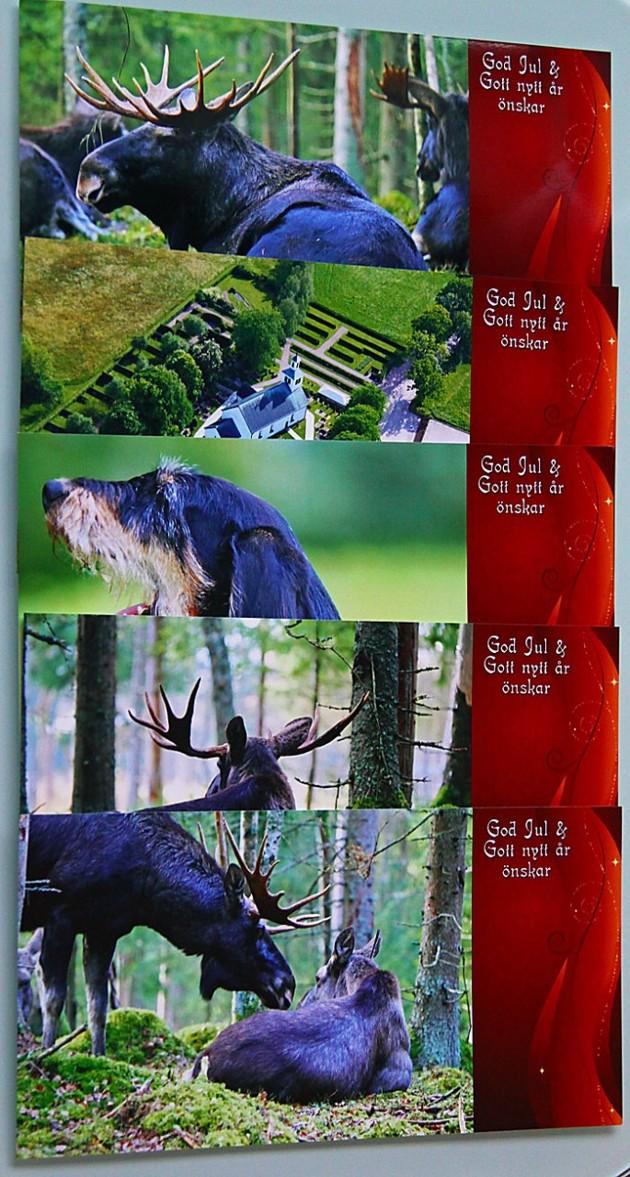 Bilder jag fotograferat...julkort på fotopapper!!