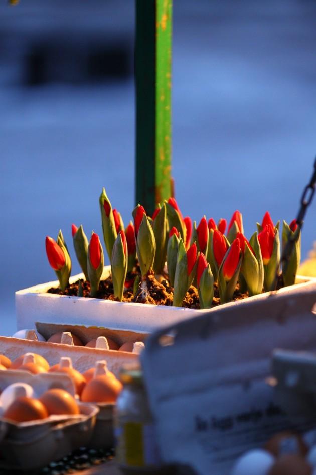 Blommorna har en tuff tillvaro på torget. Notera äggen...en delikatess frusna ägg??